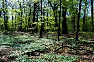 001 Forår i skoven #1