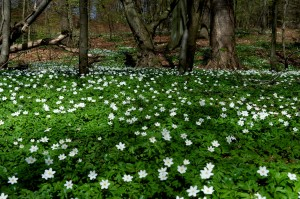 001 Forår i skoven #2